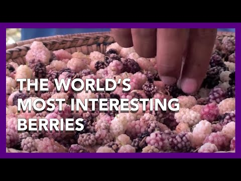 The World's Most Interesting Berries