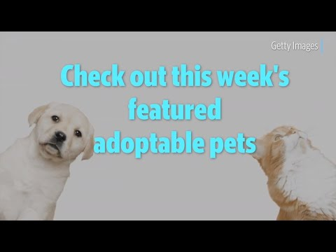 Puppies and kittens galore, oh my! Check out this week's featured adoptable pets