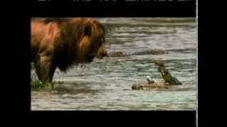African Cats - Kingdom of Courage - Earning His Keep