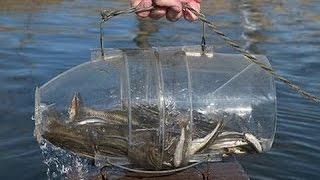 Como fazer uma armadilha pra peixe em 30 segundos