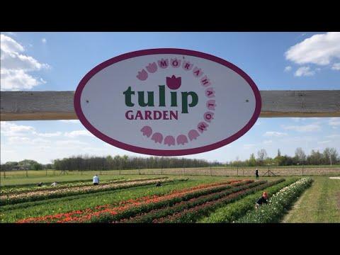 Szedj tulipánt, és érezd jól magad!