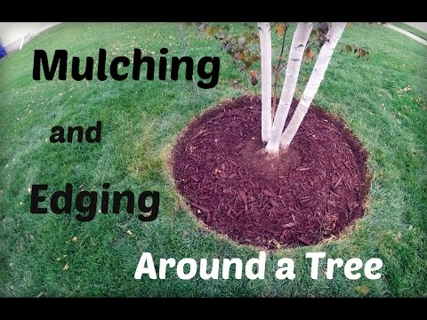 Lawn Update 32 How To Mulch And Edge Around A Tree Youtube
