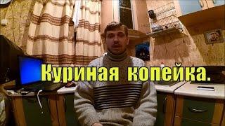 Доход от КУР НЕСУШЕК // Куриная копейка // Жизнь в деревне