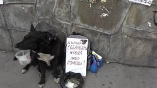 Безработная собака в Москве начала подрабатывать