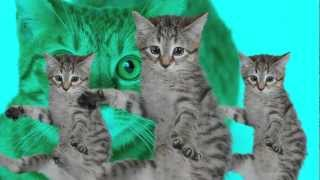 Repeat youtube video Best Kittycat Song [OFFICIAL] feat. GRUMPY CAT