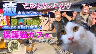 【保護猫カフェ】ねこ屋【津市江戸橋】
