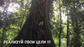 Мотивашка от Артёма - Тарзана)))