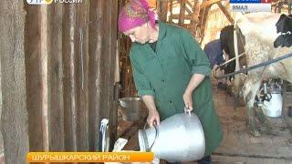 Что ни дойка - то рекорд. Отчего мужевские коровы дают все больше молока?