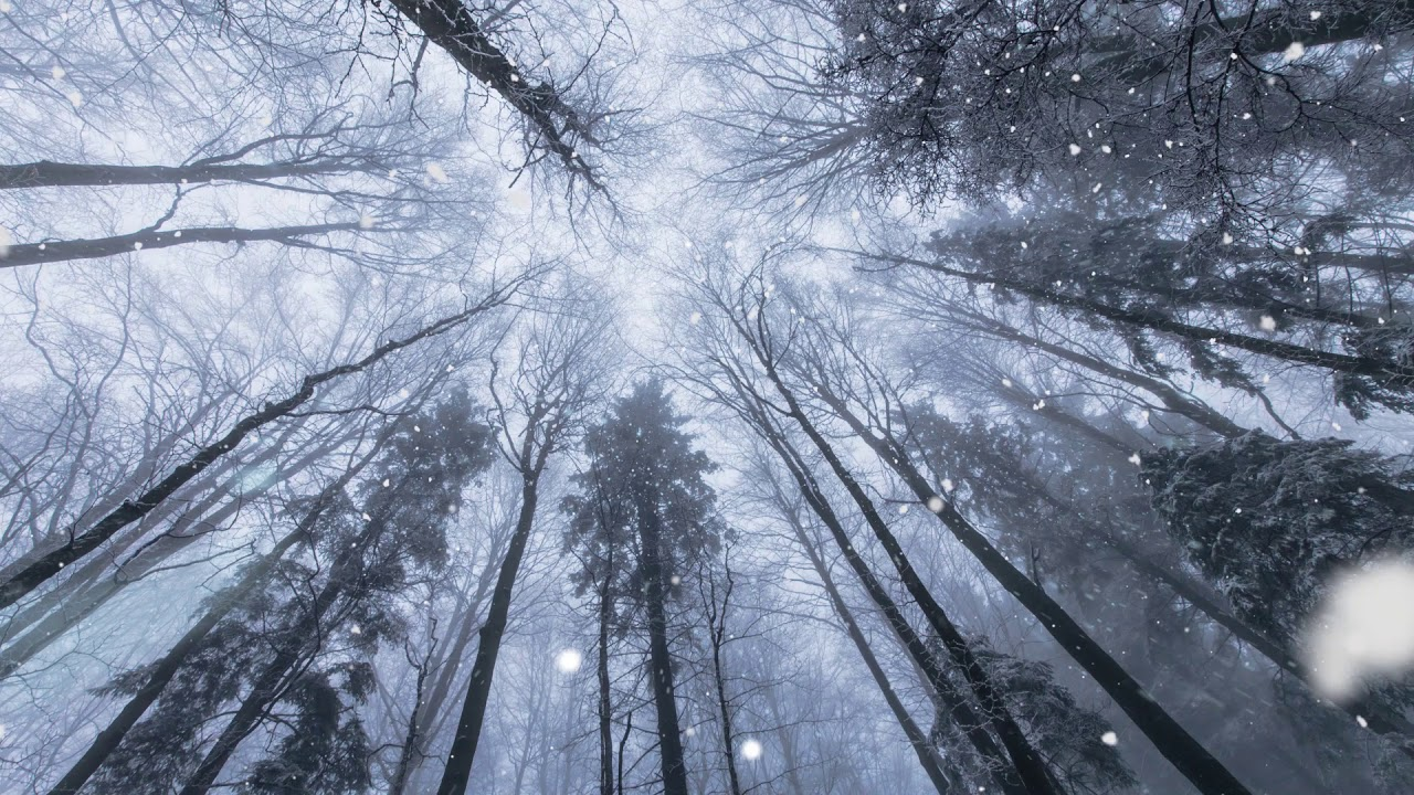 Download Snow & sleet sounds falling in a winter forest