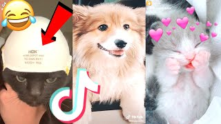 August 2020 Funny Cute Tik Tok Animals Compilation(Pt.2) Cat 2020