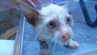 Saving Drowning Kittens