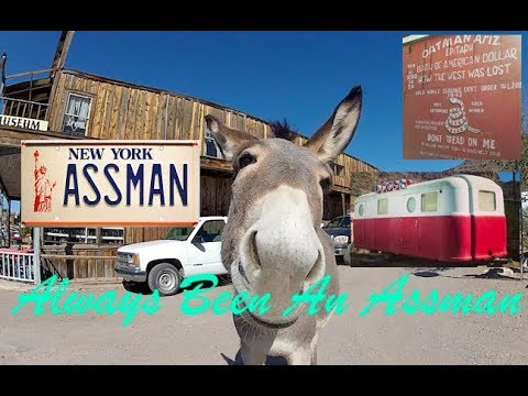Oatman AZ  Wild Burros and Free Camping Find!