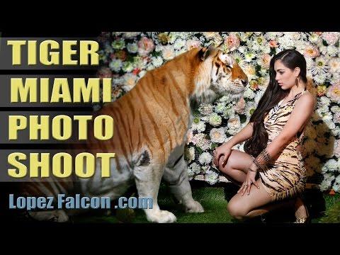 LOPEZ FALCON: TIGER PHOTO SHOOT Quinces Photography Video Miami Quinces Sweet Quinceanera15 Dresses