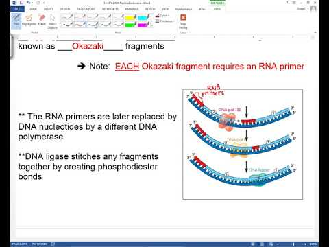 DNA Replication: The Details of Elongation
