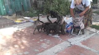 Бездомное семейство котов