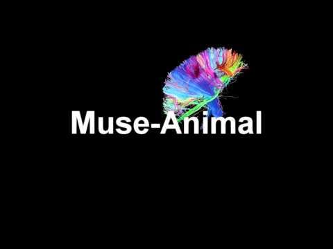 Muse Animals