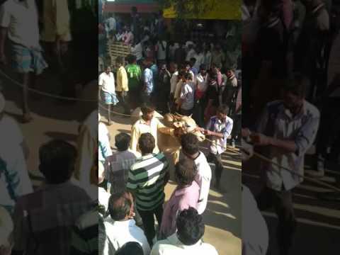 Eruthu kattu Pichanur gudiyatham Vellore dist