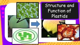 Science – Structure and Functions of Plastids – English