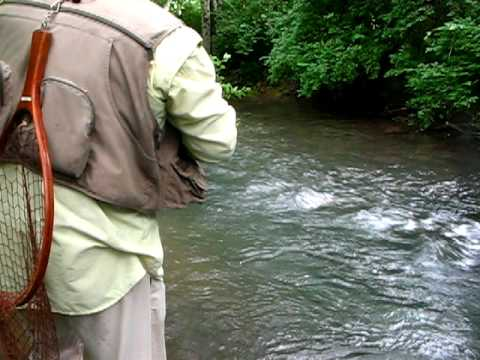 Fighting A Large Rainbow - - - Jeff Wilkins Fly Fishing