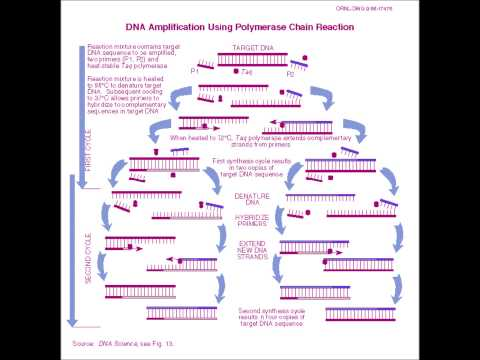 PCR song for - A2 Snab Biology