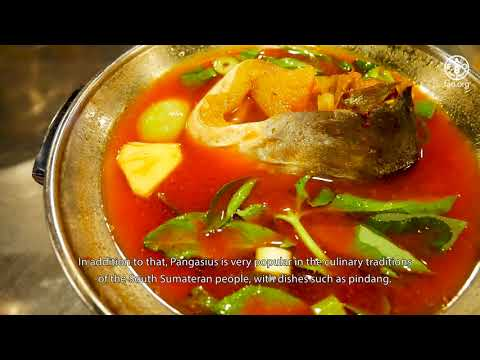 The Development Of Self-Sufficient Feed Programme For Pangasius In South Sumatera – (English Subs)