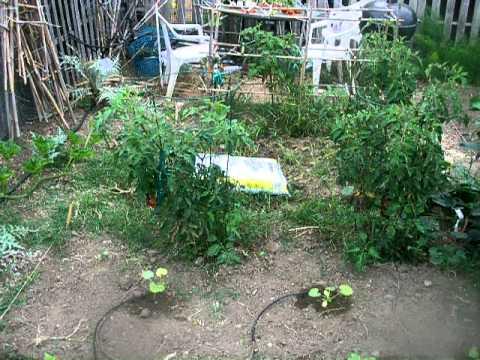 Community Garden Tour-Mendoza School.MOV