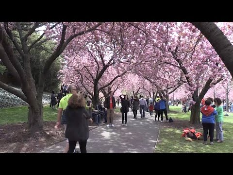 New York'ta ilkbahar