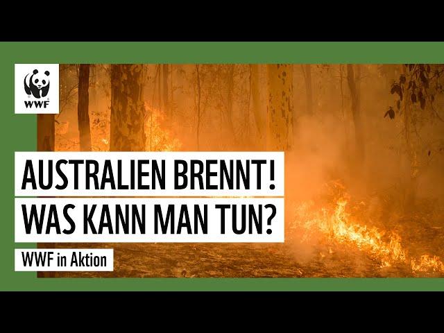 Australien brennt! Was kann man tun? | WWF in Aktion