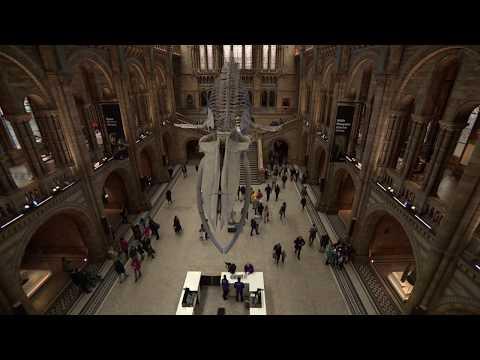 جولة افتراضية في متحف العلوم الطبيعية في لندن!  - نشر قبل 19 ساعة