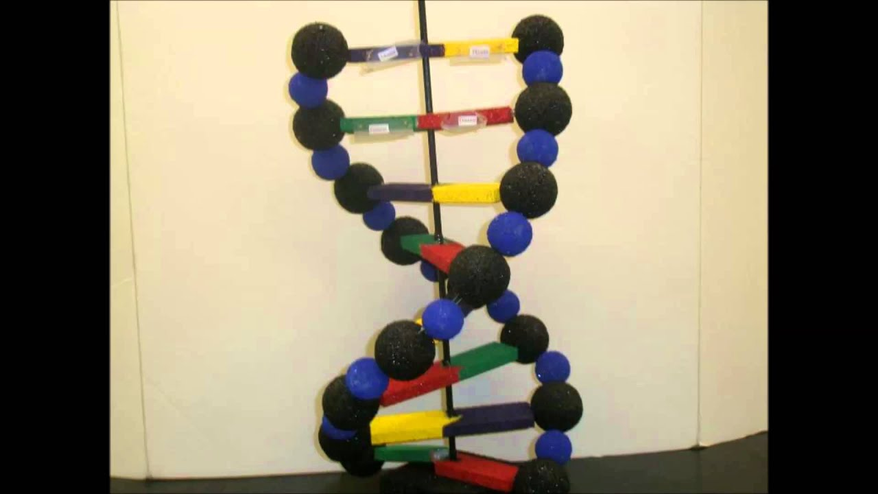 Making a model dna youtube solutioingenieria Choice Image