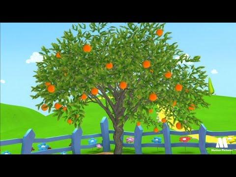 شجرة برتقال كرتون
