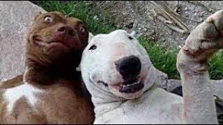Animals   Funny Fails Compilaton