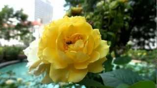 видео Мой любимый английский сад