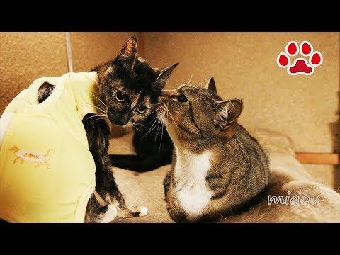 みみ姉さんのほうが優しかったわ子猫らな【瀬戸のらな日記】Mimi was more gentle to me Cute kitten Lana