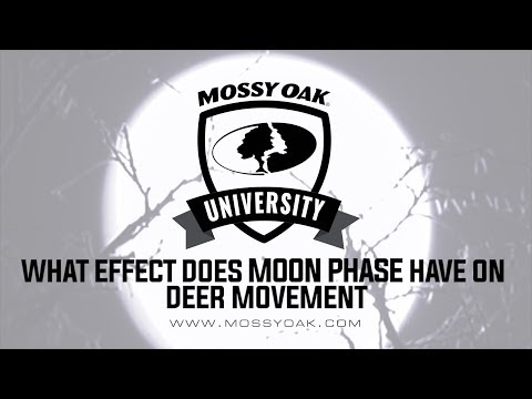 What Effect Does The Moon Phase Have On Deer Movement