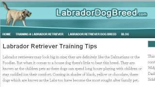 Female Yellow Lab Dog Training Tips