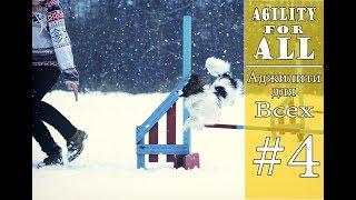 Аджилити для всех!   Часть 4   Как научить собаку прыгать барьер ?