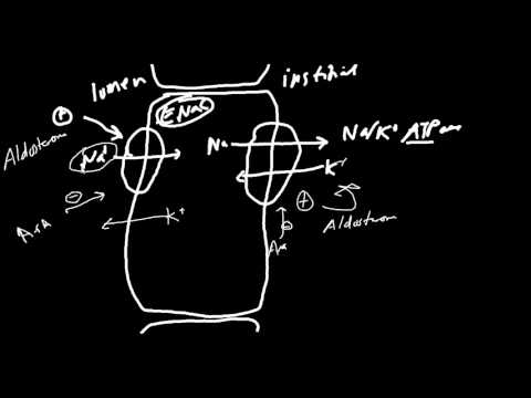 Aldosterone Receptor Blockers Made Simple