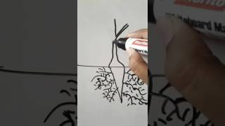 Basic parts of plants for kids to learn and draw || pavani☺☺