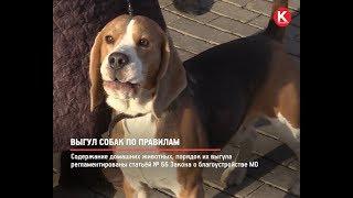 КРТВ. Выгул собак по правилам