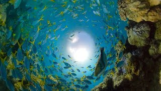 GoPro Awards: Great Barrier Reef with Fusion Overcapture in 4K