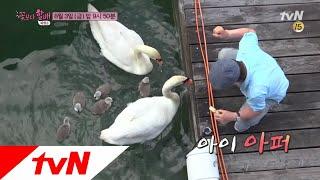 Grandpas Over Flowers Season 4 ′동물의 아버지′ 순재&백조 가족의 운영적인 만남..(?) 180803 EP.6