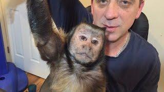 Capuchin Monkey Q