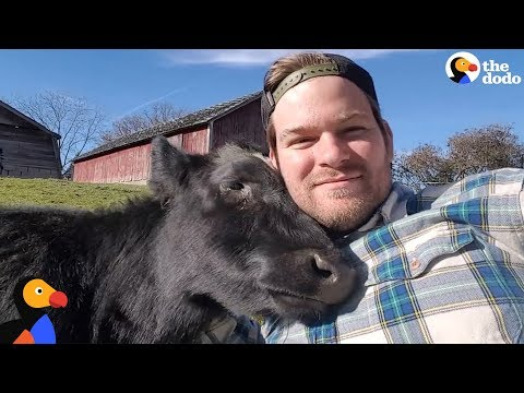 Amazing Man Turns Family Farm Into Animal Sanctuary | The Dodo
