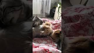 Любовь кошки к собаке.