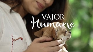With Love, Vajor Humane