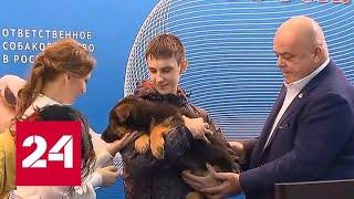 Точка в резонансной истории: подростку из Томска кинологи подарили щенка - Россия 24