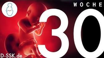 30. SSW / 30. Schwangerschaftswoche ✪ D-SSK.de