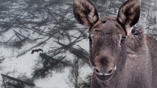 Чернобыль - лес после пожара | Film Studio Aves