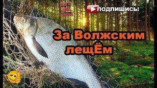 Ловля леща